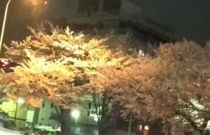夜桜20160404