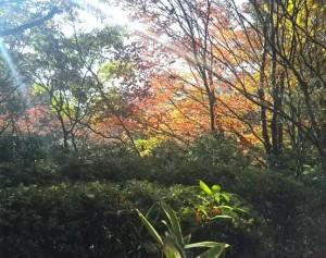 木漏れ日紅葉20161120